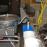 Ekholmen Lantbruk matning av kalvar